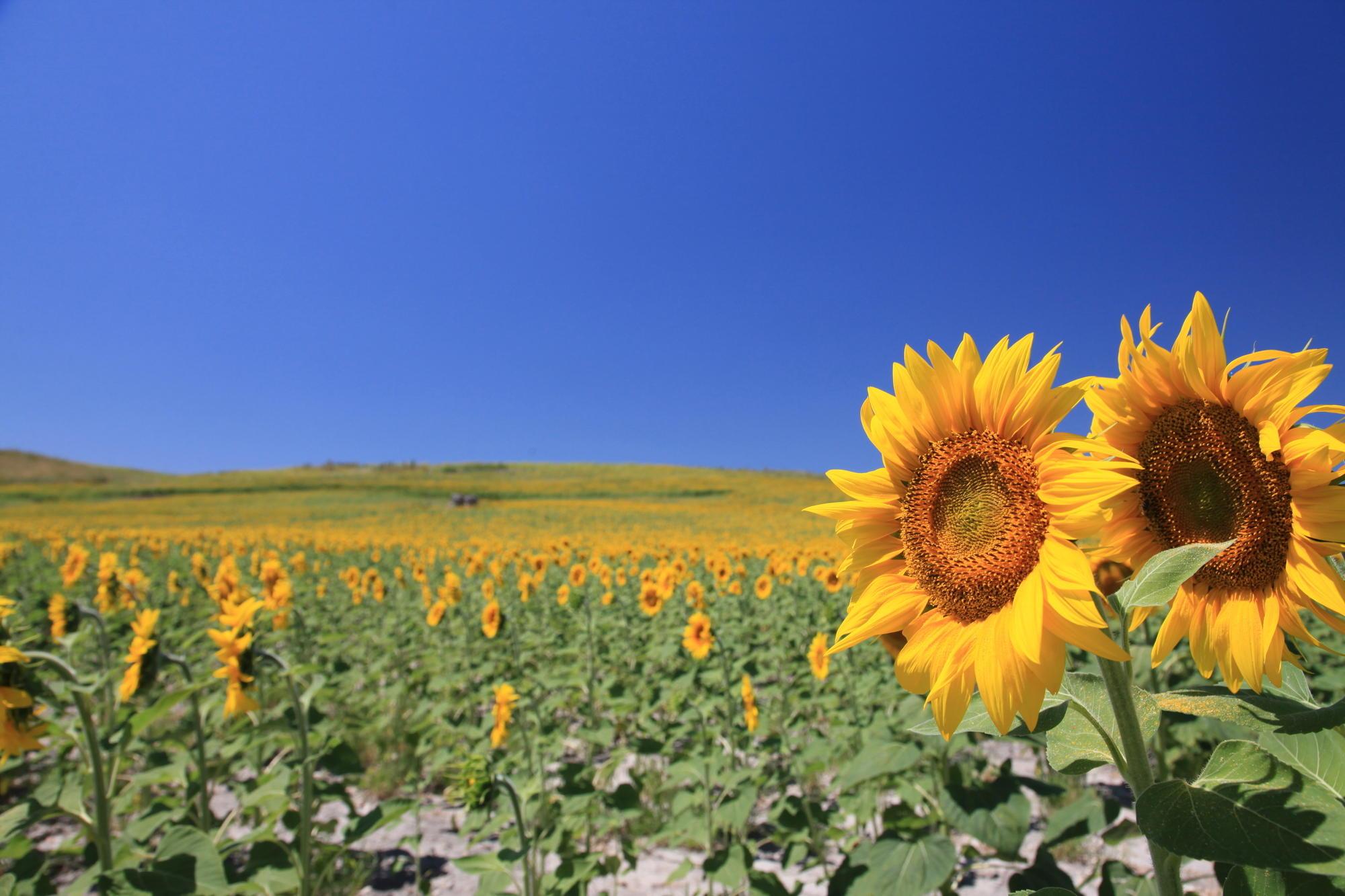 世界で楽しもう!季節のお花イベント