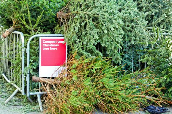 クリスマスを共に過ごしたツリーたちは捨てられずにリサイクルされます