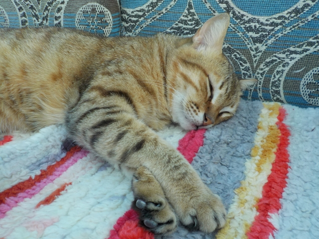 可愛い猫たちにも癒されます