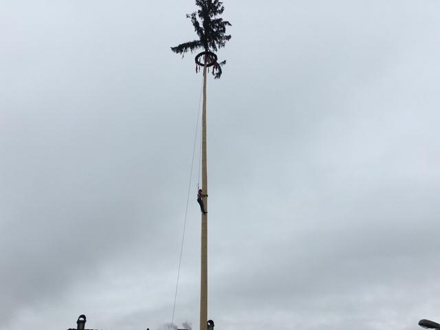 聳え立つもみの木。中腹に男性が!