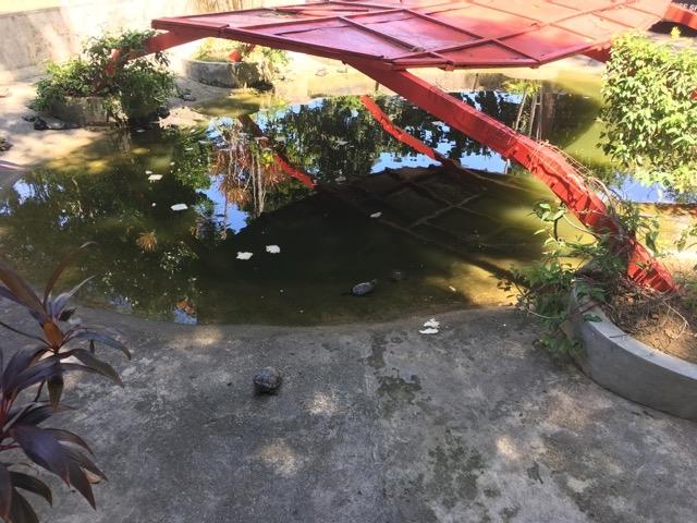 亀 保護区 自然