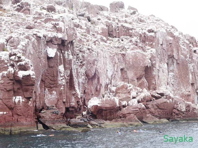 断崖とアシカ