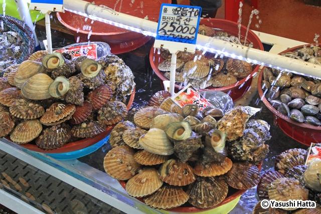 貝の盛り合わせ。大きなたらいに種類豊富な貝が集められている