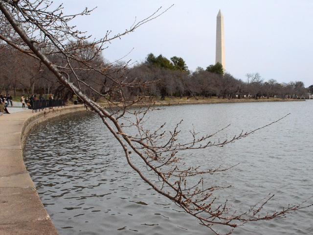 ワシントンDCのタイダルベイスンの桜並木の遊歩道