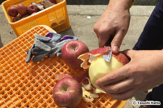 韓国でもリンゴはふじの栽培が盛ん。韓国語ではプサと呼ばれる