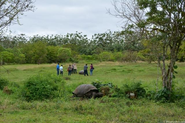 ゾウガメの保護区エル・チャト