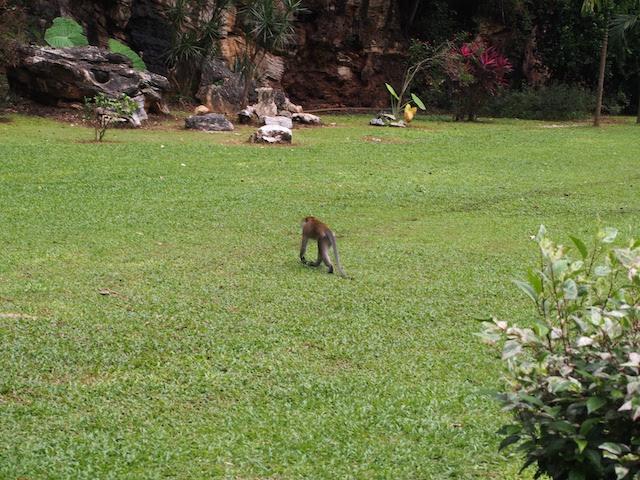 ケッラットン洞窟寺の奥には中華庭園に出没する野生の猿