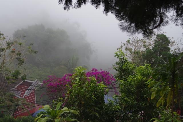 ペナンヒル頂上で熱帯植物をおおうように広がる霧