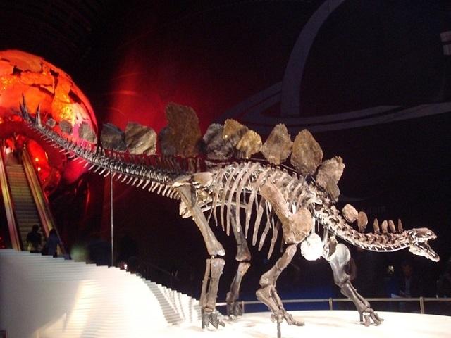 世界で最も完璧な状態といわれる、ステゴザウルス骨格の化石