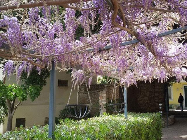 春には藤の花が咲き誇る