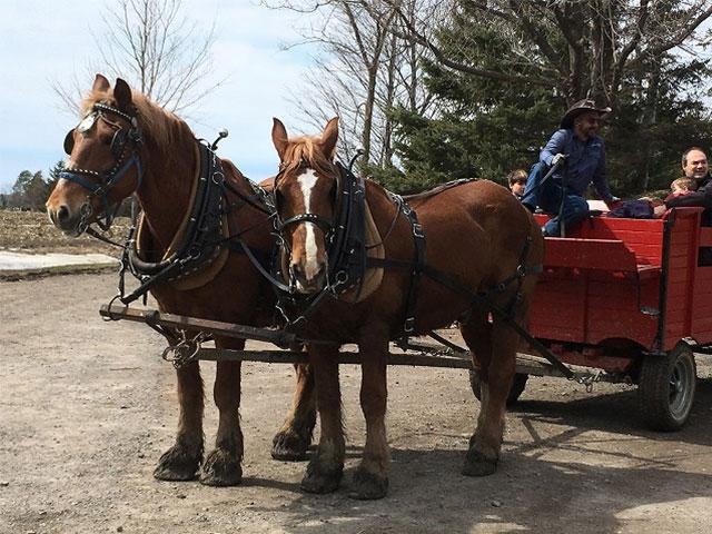 馬ゾリに乗ってみよう!