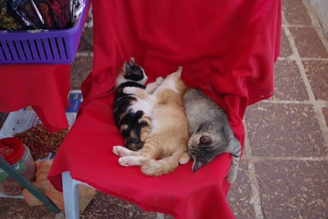 猫が昼寝をしているセントポール教会