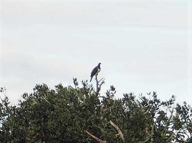 モツイへ島に住むたくさんの鳥たち