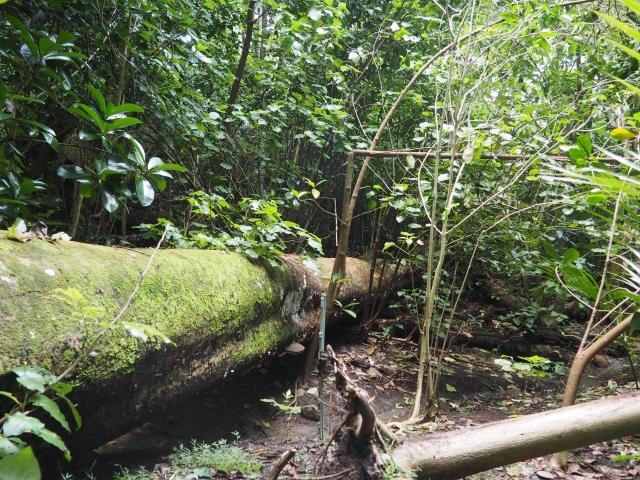 ムカシトカゲやペンギンのコロニーもある林の中