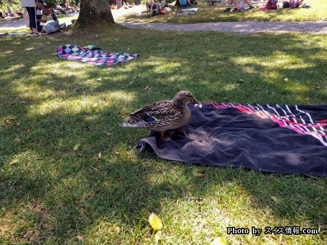 バスタオルを敷いて日光浴をするのがスイス流