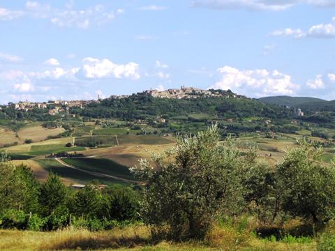 モンテプルチャーノはぶどう畑とオリーブの木々に囲まれた丘の上にあります。