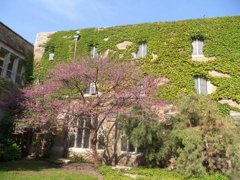 ELSシカゴ。ドミニカン大学、プライオリティキャンパス。