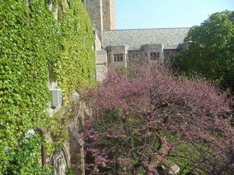 プライオリティキャンパスにて、ELSの教室からの眺め。