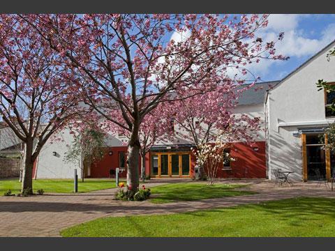 中庭の桜は春になると満開です