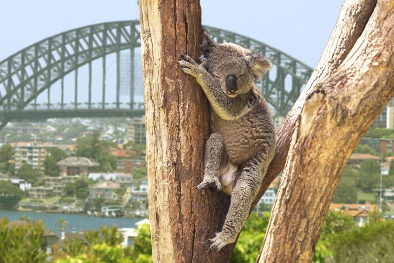 オーストラリア&ニュージーランド留学&ワーキングホリデーセミナー